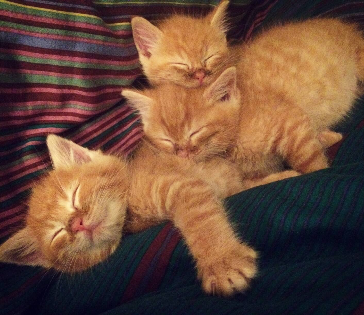 Sleeping kittens.